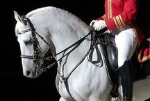 Horses - The Lippizzaner/Andalusian