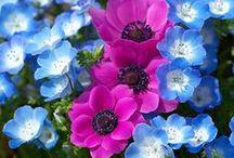 Çiçekler-Flower