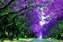 Doğa _nature