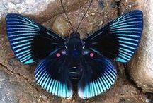 Kelebekler-Butterflies