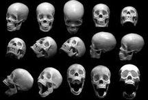 bones / anatomy