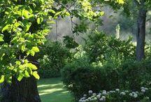Permakultúra...zöldség, gyümölcs...fűszer- és gyógynövény...