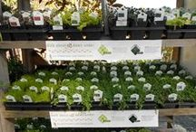 business ideas / Ideas for my backyard garden shop, plants and items I want to sell. / by Teresa Russell