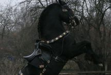 Beautiful Horses / If it weren't for horses, Lord of The Rings and The Hobbit wouldn't have been the same. / by Spirit SixKings