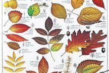 Garden prints / Old garden prints