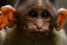 Monkey see... / by Colette Z