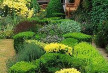 Herb garden / Herb at home