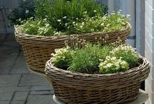 Container Gardening / Stylish
