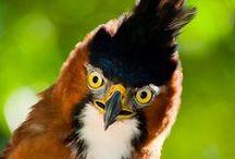 Fugle forfra