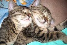 Ramiz & Bahar / My cats