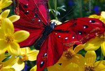 Butterflys / Nature