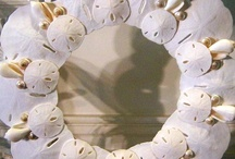Shells / by Linda Large-Menkhoff