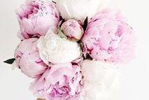 Flower bomb!!