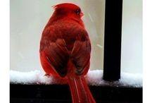 Design Inspiration - Red Hues
