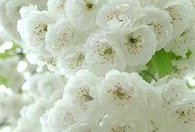 Białe rośliny zwierzęta i ....