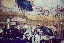 Bichos / Insectos varios