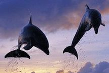 Dolphins !!!