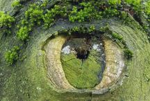 Doğadan Fotoğraflar