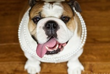 I Love Bulldogs / by Susan Lupo
