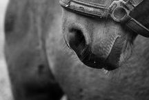 Horse Sense / by Heidi Montano