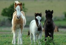 The world of horses / Para mí, es el animal más bello que existe sobre el planeta Tierra.