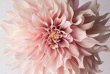 Flowers / ❤✿❤✿❤✿❤✿❤