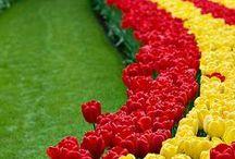 Pin!TulipsGarden / チューリップのガーデニングヒントをPin!