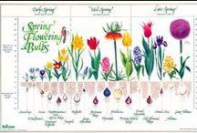 Pin! Bulbs Plant / 素敵な球根植物