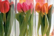 Pin! Cut Flower / 球根植物を切花で飾る