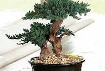 Bonsai / Perfect miniature