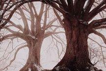 Árboles / Trees