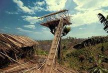Casas Árbol / Tree Houses