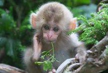 Monos / Monkeys