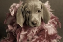 Dogs dressed up / Dogs dressed up, Dogs Prince&Princess, Dogs with flower, Dogs with hats, Dogs with beautiful hair,  and Dogs with cute eyes!