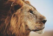 Kenya / My favorite country in East Africa