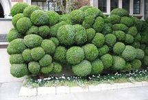Garden inspiration / This is everything I would want in my garden! Amazing topiary, clever planting, heavenly ideas.