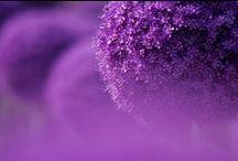 I ♥ lila