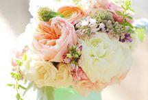 Flowers / Flowers, Herbs, ...