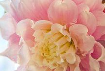♡ Flowers ♡