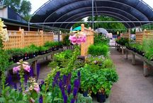 Garden center / nursery and garden center
