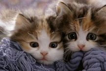 ♡Katten :)♡ / I Love cats!!!!