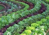 Gardening _ сад