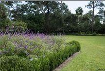 Vine Landscape : Gardens /  http://vinegardenmarket.com