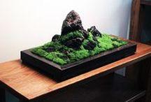 Bonsai - Koke Bonkei - Moss Landscape