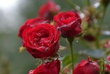 Flores / by griz sandoval