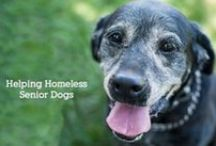 what we do / The Grey Muzzle Organization is not a shelter or a rescue. We provide resources and funding to assist animal rescues, shelters and sanctuaries nationwide for senior dog programs.
