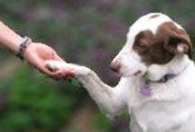 grey muzzle: who we fund / The Grey Muzzle Organization provides funding for senior dog programs nationwide.  / by The Grey Muzzle Organization