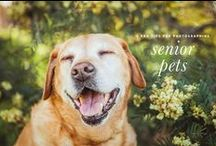 senior smiles! / cute, sweet, and funny pins inspired by our beloved senior dogs!