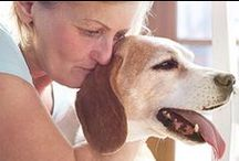 tips for senior dog caregivers