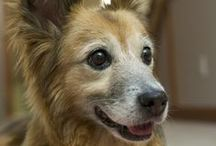 show us your seniors! / Senior dog photos submitted by Grey Muzzle supporters. These dogs are great examples of all the love and companionship senior dogs provide to their people. Email photos and captions to amanda@greymuzzle.org to share a photo of your senior dog!